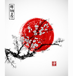 sakura in blossom and red sun symbol of japan on vector image