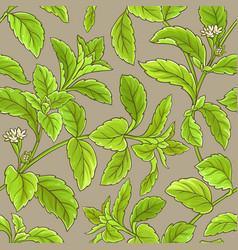 stevia pattern vector image