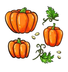 Pumpkin drawing set isolated hand drawn vector