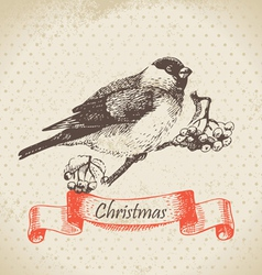 Christmas bullfinch and ashberry vector