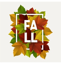 Fall decoration frame vector