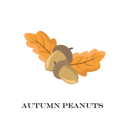 Autumn peanuts on white background vector