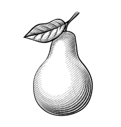 Etching pear vector image vector image