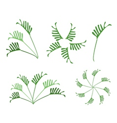 A Set of Philodendron Leaves on White Background vector image