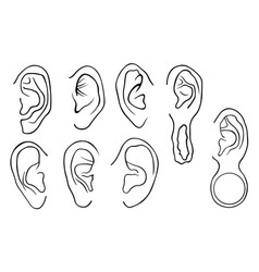 Set of different ears vector