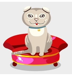 Scottish fold kitten on a red sofa vector image
