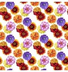 Watercolor zinnia pattern vector image vector image
