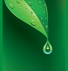 green leaf with many water drops vector image