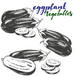 eggplant vegetable set hand drawn vector image