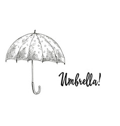 opened umbrella contoured vector image