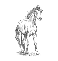 Racehorse stallion sketch for equine sport design vector
