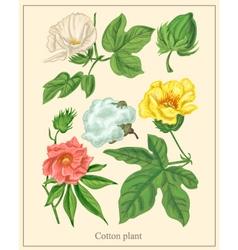 Cotton plant botanical vector