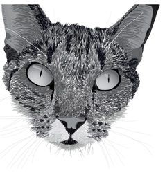 Head of a cat vector