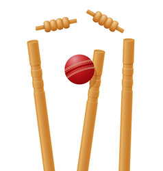 ball cricket in wicket vector image