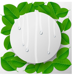 Green leaves background with water drops vector image vector image