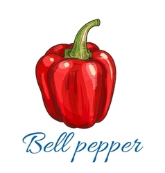 Red bell pepper or paprika vegetable sketch vector image