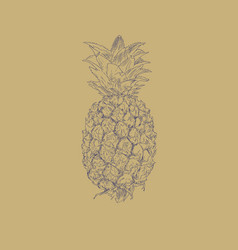 pineapple fruit sketch vector image