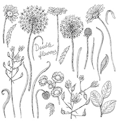 doodle flowers vector image