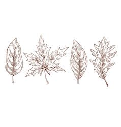 various autumn leaves contoured brow contour vector image vector image