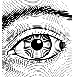 Engraving human eye vector