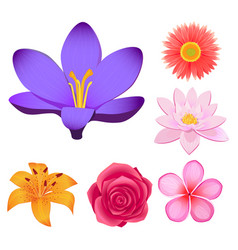 Gorgeous flower buds isolated set vector