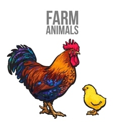 Rooster and chicken poultry farm vector