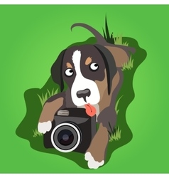 Lop-eared dog with a camera on the grass vector