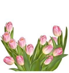 Tulips on a white background eps 10 vector