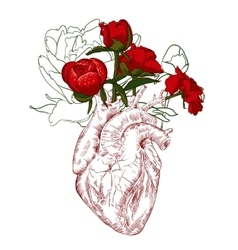 drawing Human heart with flowers vector image vector image