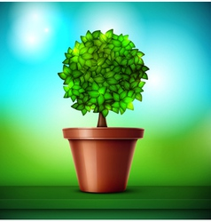 Tree in pot vector