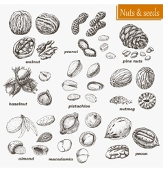 Collection of nuts and seeds vector image