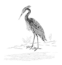Heron vintage engraving vector
