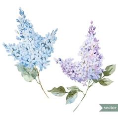 Lilac branch vector
