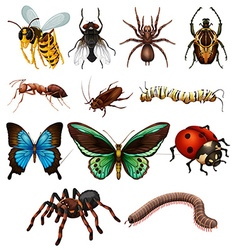 Set of different wild insects vector