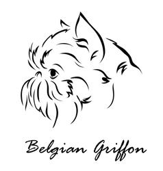 Belgian Griffon vector image vector image