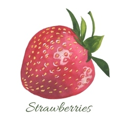 Hand drawn of Strawberry vector image