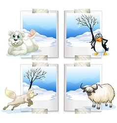 Four kind of arctic animals vector image vector image