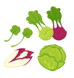 healthy greens and vegetables isolated cartoon vector image vector image