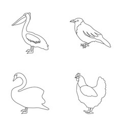 Pelican crow and other species birds set vector