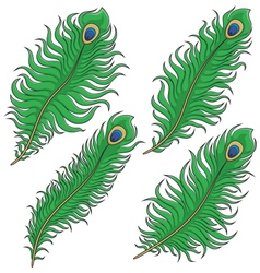 Set of colored peacock feather vector