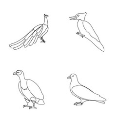 Peacock woodpecker and various species birds set vector