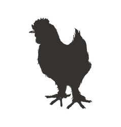 Chicken sketch silhouette animal farm icon vector