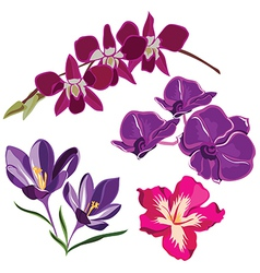 Set of realistic flowers isolated on black vector