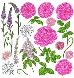 Doodle flowers color vector