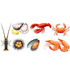 Set of fresh seafood vector