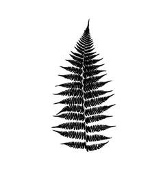 Fern leaf silhouette vector
