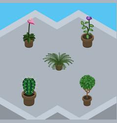 Isometric plant set of peyote plant tree and vector