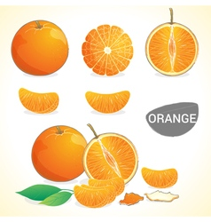 Set of oranges fruit in various styles vector image vector image
