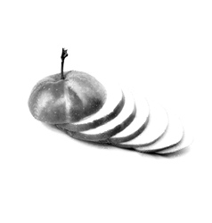 Sketch painting apple on a white background vector image