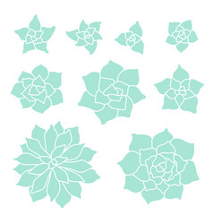 Teal succulent plant set on white background vector